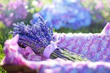 Grow Your Own Herbal Home Garden